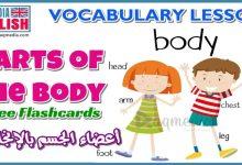 تعليم أسماء أعضاء جسم الإنسان في اللغة الانجليزية ومعانيها بالصوت والصورة