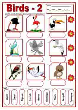 birds-2-activities-wordsearch-ESL-EFL-downloadable-printable-worksheets-practice-exercises-and-activities-to-teach-about-birds-picture-dictionaries