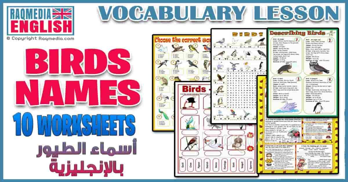أسماء الطيور بالعربية والإنجليزية للمبتدئين بالصوت والصورة