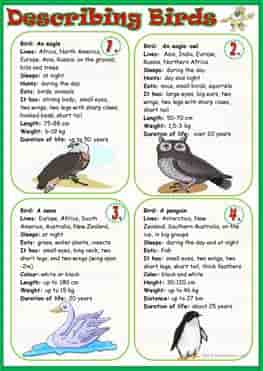 describing-birds_wordsearch-ESL-EFL-downloadable-printable-worksheets-practice-exercises-and-activities-to-teach-about-birds-picture-dictionaries