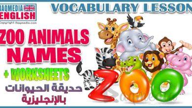 أسماء الحيوانات بالعربية والإنجليزية للمبتدئين بالصوت والصورة